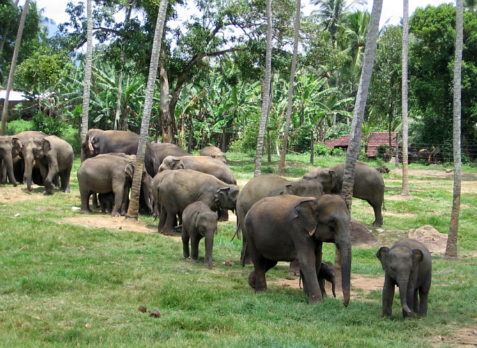 Image of elephants in SriLanka